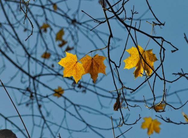 Herbstdepression | Winterdepression | Hypnosetherapie Hamburg